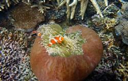 Water Sports in Lembongan, Beautiful Coral Reef
