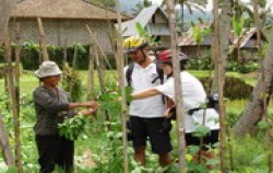 Village Plantations,Bali Cycling,Jatiluwih & Kintamani Cycling