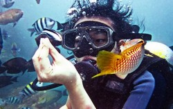 Dive,Bali Diving,Diving Activities by BMR