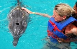 Dolphin Petting,Bali Dolphins Tour,Dolphins Interactive at Melka Hotel Lovina