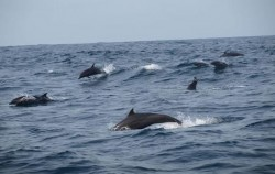 Dolphin Watching Tour,Benoa Marine Sport,Fishing & Dolphin Watching Tour