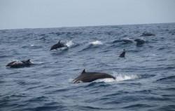 Fishing & Dolphin Watching Tour, Benoa Marine Sport, Dolphin Watching Tour