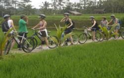 Down Hill Cycling image, Bali Emerald Cycling Tour, Bali Cycling