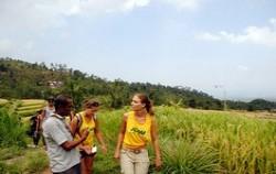 Secret of Sambangan Trekking by Alam Adventure, sambangan rice field