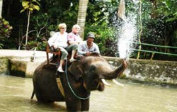 Elephant on water,Bali Elephant Riding,Bakas Elephant Riding