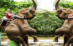 Elephant Ride,Bali Elephant Riding,Bakas Elephant Riding