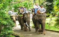 Elephant Adventure,Bali Elephant Riding,Bakas Elephant Riding