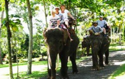 Elephant Safari,Bali Elephant Riding,Bakas Elephant Riding