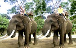 Elephant Riding image, Bakas Elephant Riding, Bali Elephant Riding