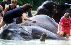 Elephant Safari image, Explore Tangkahan 8 Days 7 Nights, Sumatra Adventure