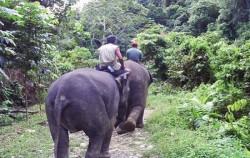 Elephant Riding,Sumatra Adventure,North Sumatra Special Tour 9 Days 8 Nights