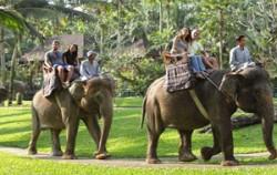 Safari Riding,Bali Elephant Riding,Bali Adventure Elephant Riding