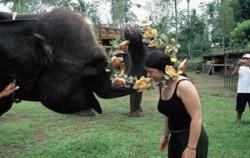 Bakas Elephant Show,Bali Rafting,Bakas Levi Rafting