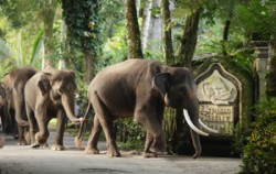 Safari Lodge Taro,Bali Elephant Riding,Bali Adventure Elephant Riding