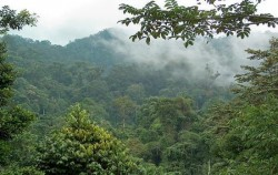Gunung Leuser Park,Sumatra Adventure,Leuser National Park Trekking 4 Days 3 Nights