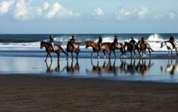 Bali Horse Riding, Bali Horse Riding, Beach Horse Riding