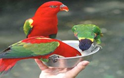Bali Bird Park, Fun Adventures, Interactive Feeding