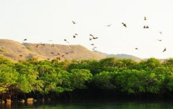 Kalong Island image, Komodo - Gili Laba Tour 4 Days 3 Nights, Komodo Adventure