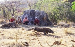 Komodo Dragon Rinca,Komodo Adventure,Komodo Island Adventure 5 days 4 Nights