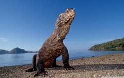 Komodo,Komodo Adventure,Kupang tour 5D4N Packages