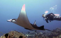 Komodo Diving,Komodo Adventure,Komodo Diving 5 Days Package
