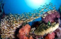 Komodo Diving,Komodo Adventure,Komodo Diving 6 Days Package