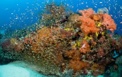 Komodo Diving,Komodo Adventure,Komodo Diving 6 Days Package