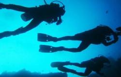 Diving Activities,Bali Diving,Nautilus Diving Bali