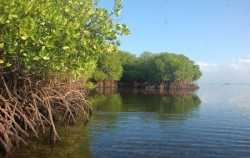 Mangrove Tour Lembongan,Lembongan Package,Lembongan Full Day Package by DCamel Fast Ferry