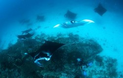 Manta Point,Komodo Adventure,Komodo Island Adventure 5 days 4 Nights