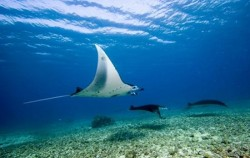 Manta Point image, Komodo - Gili Laba Tour 4 Days 3 Nights, Komodo Adventure