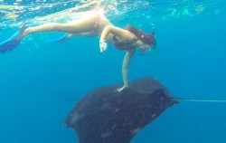 Snorkeling with Manta Fish,Nusa Penida Packages,Nusa Penida Snorkeling Package
