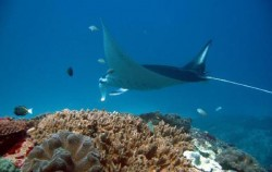 Manta Point Nusa Penida image, Nusa Penida 3 Days 2 Nights Package, Nusa Penida Packages