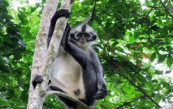 Monkey,Sumatra Adventure,Bukit Lawang Orangutan Tour 2 Days 1 Night