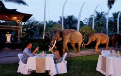 Night Safari,Bali Elephant Riding,Bali Adventure Elephant Riding
