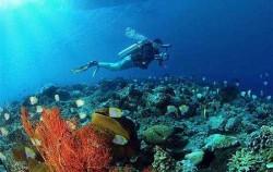 Diving Activities by BMR, Nusa Penida Dive Site
