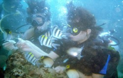 Nusa Lembongan Diving Sites,Bali Diving,Bali Diving Activities