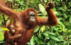 Orangutan Borneo,Borneo Island Tour,Mahakam and Orangutan Tour 4 Days