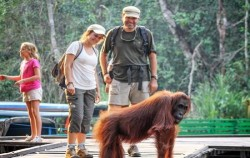 Orangutan and Dayak Explore 5 Days 4 Nights, Borneo Island Tour, Camp Leakey