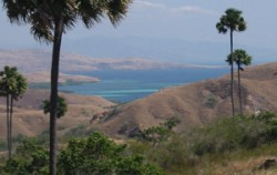 Rinca Island,Komodo Adventure,Sailing Komodo Adventure 3D2N Tours