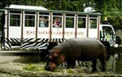 Bali Safari & Marine Park Package, Bali Safari Marine Park, Safari Explorer
