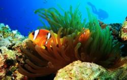 Sanur Diving Sites,Bali Diving,Bali Diving Activities