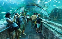 Seaworld Ancol,Jakarta Tour,Jakarta Fantasy Land