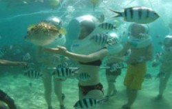 Sanur under sea image, Sea Walker Adventure, Bali Sea Walker
