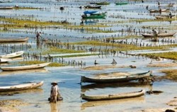 Seaweed Farmer Lembongan image, Lembongan Overnight Package 2 Days 1 Night, Lembongan Package