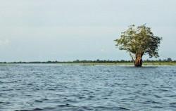 Semayang Lake,Borneo Island Tour,Orangutan and Dayak Tour 6 Days 5 Nights