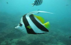 Snorkeling Site Bali image, Yos Marine Diving Tours, Benoa Marine Sport