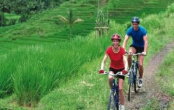 Rice Field View,Bali Cycling,Cycling Batur by Sobek Adventure