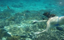 Snorkeling Activity,Lembongan Package,Lembongan Overnight Package 2 Days 1 Night