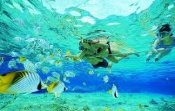 Snorkeling image, One Day Package by Scoot Fast Cruise, Lembongan Package